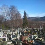 Ogromny świerk na cmentarzu w Tymbarku.