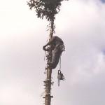 Obcinanie drzewa